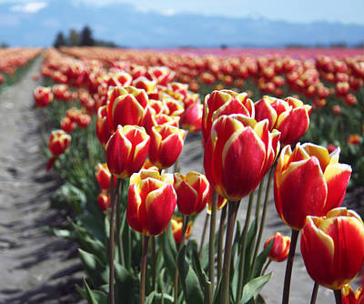 Photograph - Tulip 35 by Cheryl Boyer