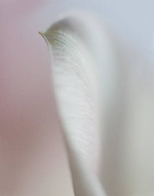 Photograph - Tulip Abstract IIi by David and Carol Kelly
