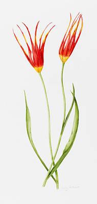 Intertwining Painting - Tulip Accuminata by Sally Crosthwaite