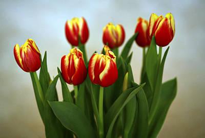 Tulip Photograph - Tulip Arrangement by Marilyn Hunt