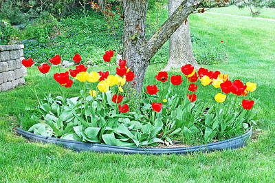 Tulip Bed Print by Aimee L Maher Photography and Art Visit ALMGallerydotcom