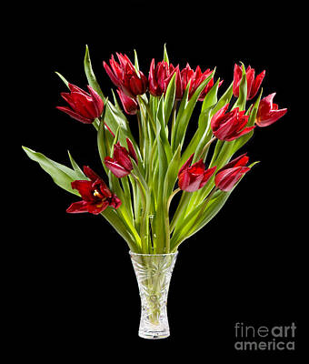 Womens Photograph - Red Cut Tulips Bouquet In Glass Vase by Arletta Cwalina