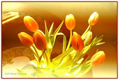 Perfect Christmas Card Photograph - Tulip Brilliance by Sonali Gangane