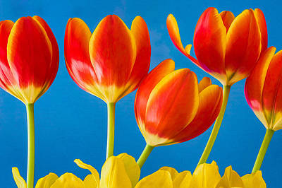 Photograph - Tulip Cheer by Joan Herwig