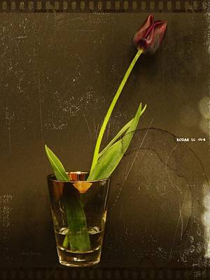 Tulip  Art Print by Chris Berry