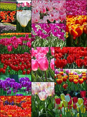 Photograph - Tulip Collage by Allen Beatty