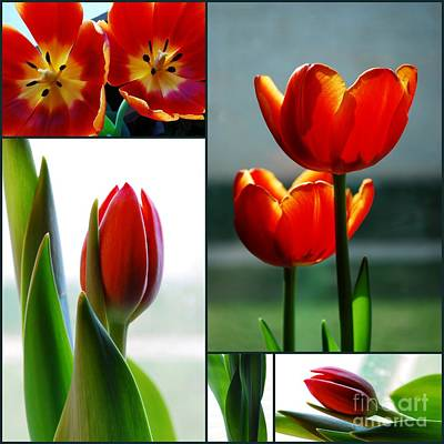 Anchor Down - Tulip Collage by Nancy Mueller