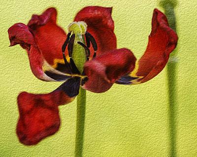 Photograph - Tulip Digital Painting by Vishwanath Bhat