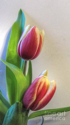 Genus Photograph - Tulip Duo by Cathy Lindsey