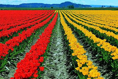 Photograph - Tulip Farm by Benjamin Yeager