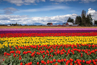 Canon 6d Photograph - Tulip Farm by Pierre Leclerc Photography