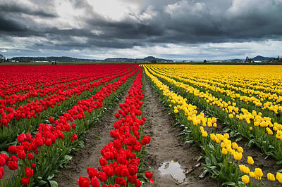 Photograph - Tulip Farm by Roger Mullenhour