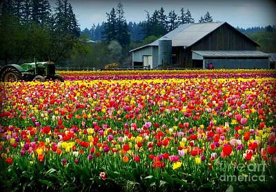 Photograph - Tulip Farm  by Susan Garren