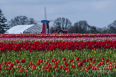 Park Photograph - Tulip Field by Mandy Judson