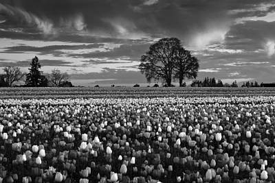 Photograph - Tulip Fields Forever by Wes and Dotty Weber