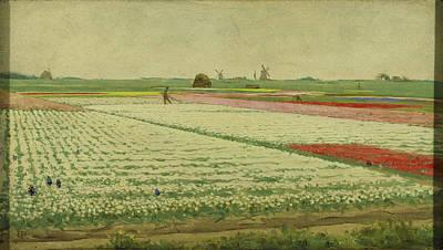 Tulips Drawing - Tulip Fields, Gerrit Willem Dijsselhof by Litz Collection