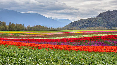 Agassiz Photograph - Tulip Fields Of Agassiz by Pierre Leclerc Photography
