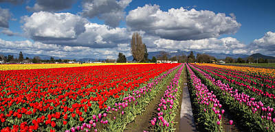 Photograph - Tulip Fields Of Color by Pierre Leclerc Photography
