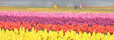 Photograph - Tulip Fields Skagit Valley Washington by Jennie Marie Schell
