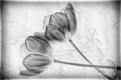 Photograph - Tulip Flowers Bw                     by Charline Xia