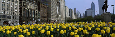 Tulip Flowers In A Park With Buildings Art Print