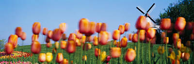 Tree Tulips Photograph - Tulip Flowers With A Windmill In The by Panoramic Images