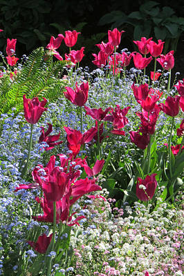 Photograph - Tulip Garden by Frank Townsley