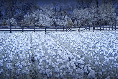 Photograph - Tulip Garden In Infrared by Randall Nyhof