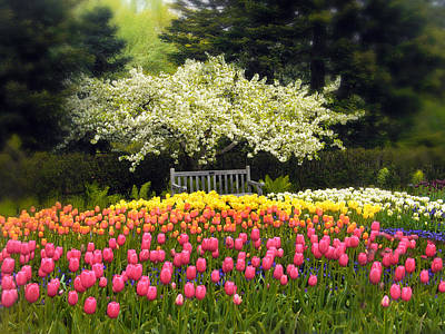 Pink Tulip Photograph - Tulip Garden by Jessica Jenney