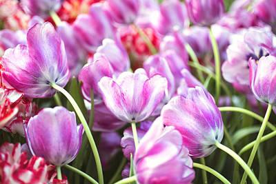 Photograph - Tulip Garden by Susan Stone