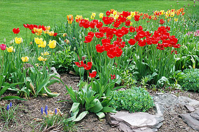 Photograph - Tulip Gardenscape by Aimee L Maher Photography and Art Visit ALMGallerydotcom
