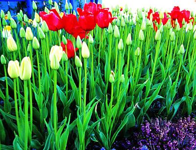 Photograph - Tulip Gathering by Robert  Rodvik