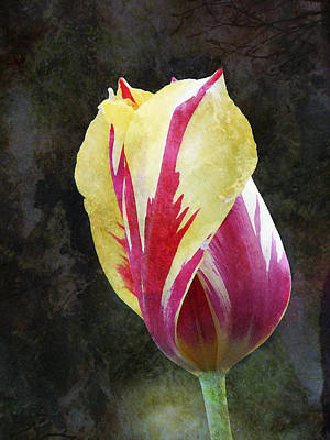 Photograph - Tulip - Red And Yellow - Textured by Marie Jamieson