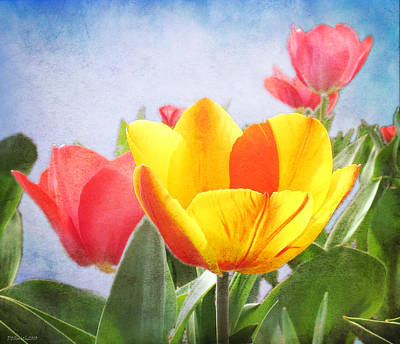 Tulip Joy Art Print by Deborah Smith