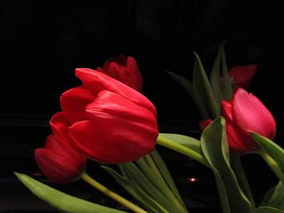 Tulip Mania Photograph - Tulip Mania 10 by Rosita Larsson