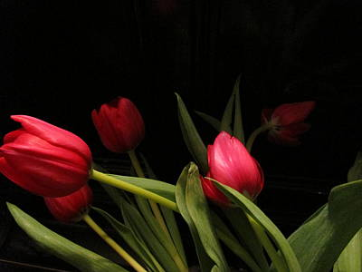 Tulip Mania Photograph - Tulip Mania 12 by Rosita Larsson