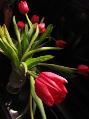 Tulip Mania Photograph - Tulip Mania 15 by Rosita Larsson