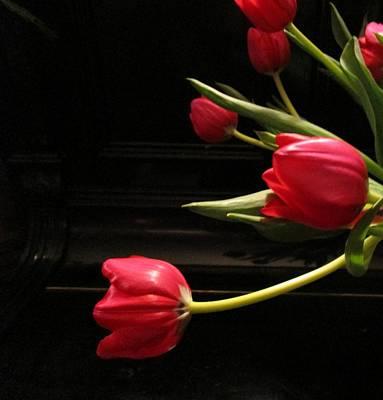 Tulip Mania Photograph - Tulip Mania 16 by Rosita Larsson