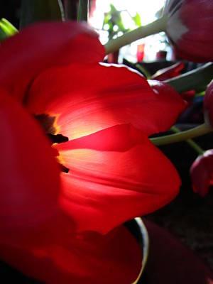 Tulip Mania Photograph - Tulip Mania 8 by Rosita Larsson