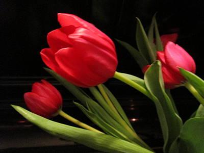 Tulip Mania Photograph - Tulip Mania 9 by Rosita Larsson