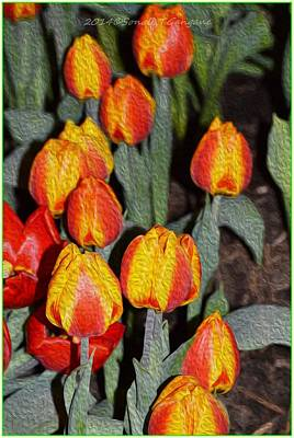 Tulips For Christmas Photograph - Tulip Mania by Sonali Gangane