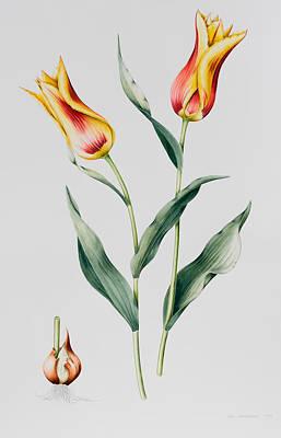 Tulip Mona Lisa Art Print