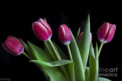 Tulip Paradise Print by Tracy  Hall
