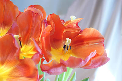 Photograph - Tulip Profusion by Margie Avellino