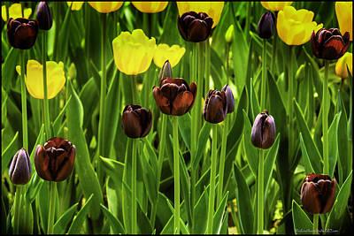 Photograph - Tulip Race Time by LeeAnn McLaneGoetz McLaneGoetzStudioLLCcom