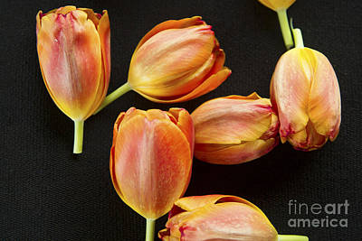 Photograph - Tulip Still Life by Jeanette French