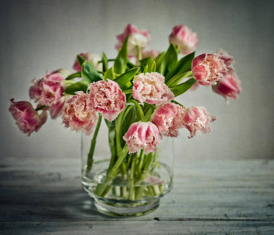 Tulip Flowers Photograph - Tulip Still Life by Nailia Schwarz