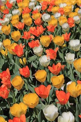 Tulip Stretch Art Print