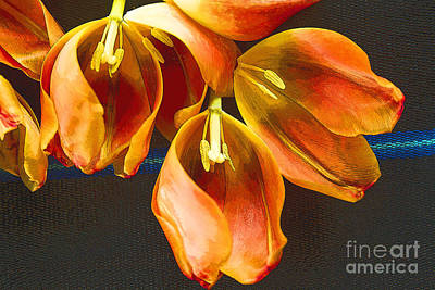 Photograph - Tulip Study 2 by Jeanette French
