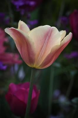 Tulip Study No. 4 Art Print